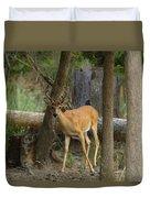 East Texas Whitetail  Duvet Cover