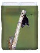 Eastern Black Swallowtail Metamorphosis Duvet Cover