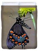Eastern Black Swallowtail Duvet Cover