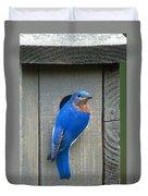 Eastern Bluebird At Nest Duvet Cover