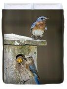 Eastern Bluebird Family Duvet Cover