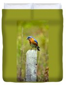 Eastern Bluebird Pose Duvet Cover