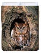 Eastern Screech Owl - Fs000810 Duvet Cover