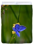 Eastern Tail Blue Butterfly Duvet Cover
