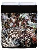 Eels 1 Duvet Cover