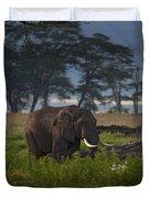 Elephant   #0134 Duvet Cover