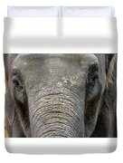 Elephant Close Up 1 Duvet Cover