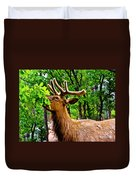 Elk - Grand Canyon National Park Duvet Cover