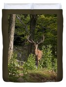 Elk Pictures 82 Duvet Cover