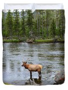 Elk Stag In The Madison River Of Yellowstone National Park Duvet Cover
