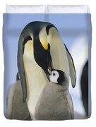 Emperor Penguin Parent Feeding Chick Duvet Cover