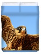 Eurasian Hobby Falco Subbuteo In Duvet Cover
