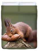 Eurasian Red Squirrel Biting Cone Duvet Cover by Ingo Arndt