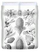 Examples Of Coniferae From Kunstformen Duvet Cover by Ernst Haeckel