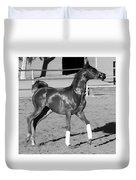 Exercising Horse Bw Duvet Cover