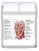 Facial Muscles Of The Human Face Duvet Cover