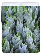False Hellebore With Frost Colorado Duvet Cover