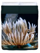 Feather Duster Worms 2 Duvet Cover