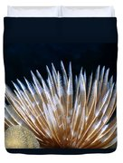 Feather Duster Worms 4 Duvet Cover