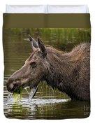 Feeding Moose Duvet Cover