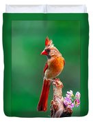 Female Cardinal Posing Pretty  Duvet Cover