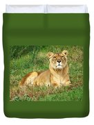 Female Lioness Lying On The Grass In The Afternoon Sun Duvet Cover