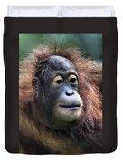 Female Orangutan Borneo Duvet Cover