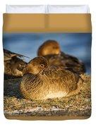 Female Readhead Duck Duvet Cover