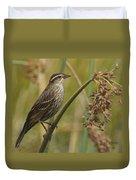 Female Redwing Blackbird Duvet Cover
