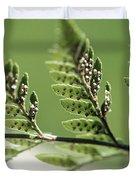 Fern Seeds Duvet Cover