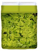 1m2436-ferns At The Base Of Mt. Robson  Duvet Cover