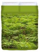 Ferns In Summer Duvet Cover