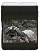 Fighting Galapagos Giant Tortoises Duvet Cover