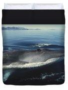 Fin Whale In Sea Of Cortez Duvet Cover