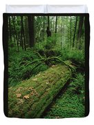 Fir Nurse Log In Rainforest Pacific Duvet Cover