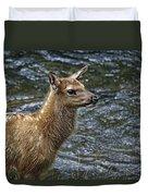 Firehole River Elk Fawn Duvet Cover