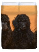 Five Poodle Puppies  Duvet Cover