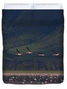 Flamingos  #6590 Duvet Cover
