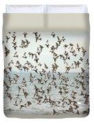 Flock Of Dunlin Duvet Cover by Karol Livote