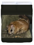 Flying Squirrel On The Feeder Duvet Cover