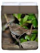 Fox Sparrow Duvet Cover