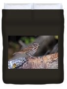 Fox Sparrow Pictures 16 Duvet Cover