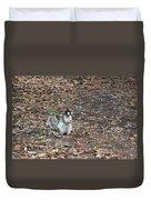 Fox Squirrel Curious Duvet Cover