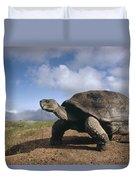 Galapagos Giant Tortoise On Alcedo Duvet Cover