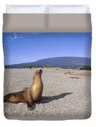 Galapagos Sea Lion Juvenile On Beach Duvet Cover