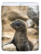 Galapagos Sea Lion Pup Champion Islet Duvet Cover