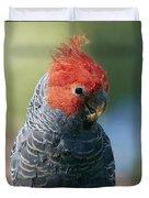 Gang-gang Cockatoo Male Canberra Duvet Cover