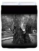 Garden Of Gethsemane Olive Tree Duvet Cover