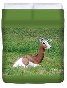 Gazelle At Rest 1 Duvet Cover