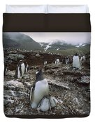 Gentoo Penguin And Chicks South Georgia Duvet Cover